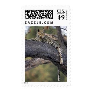 Botswana, Moremi Game Reserve, Adult Female 2 Stamp