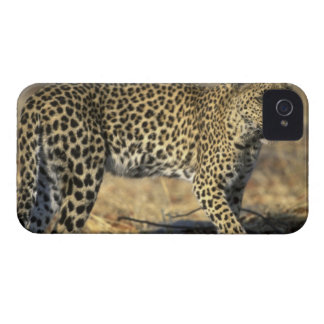 Botswana, Moremi Game Reserve, Adult Female iPhone 4 Case-Mate Case