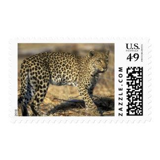 Botswana, Moremi Game Reserve, Adult Female Postage