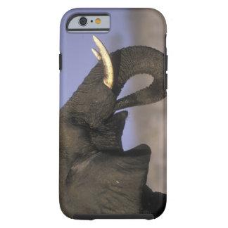 Botswana, Moremi Game Reserve, Bull Elephant Tough iPhone 6 Case