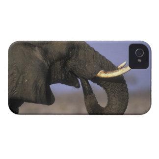 Botswana, Moremi Game Reserve, Bull Elephant iPhone 4 Cases