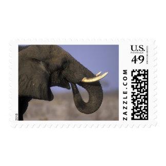 Botswana, Moremi Game Reserve, Bull Elephant Stamp