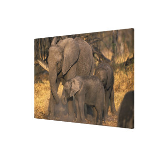 Botswana, Moremi Game Reserve, Elephant herd Canvas Print