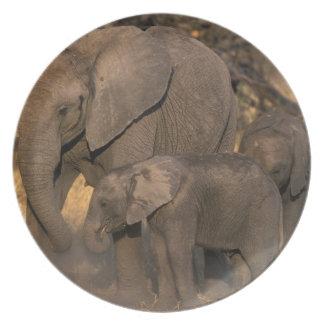 Botswana, Moremi Game Reserve, Elephant herd Dinner Plate
