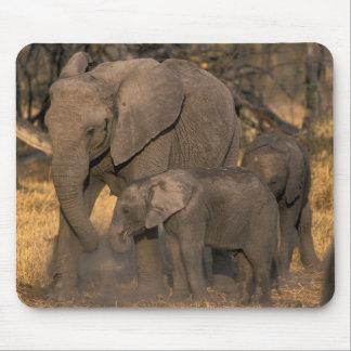 Botswana, Moremi Game Reserve, Elephant herd Mouse Pad