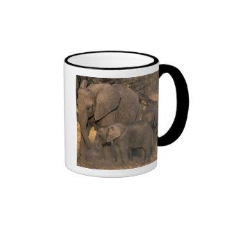Botswana, Moremi Game Reserve, Elephant herd Mug