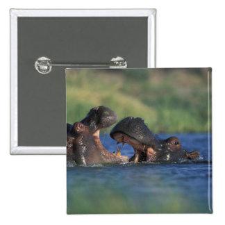 Botswana Moremi Game Reserve Hippopotami Pinback Buttons