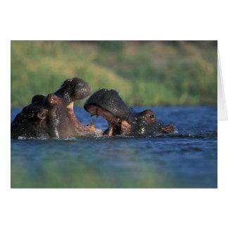 Botswana, Moremi Game Reserve, Hippopotami Card