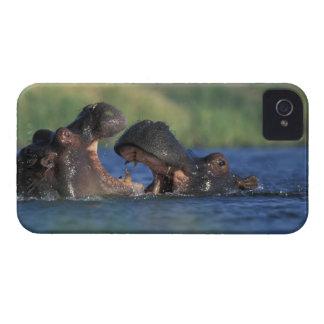 Botswana, Moremi Game Reserve, Hippopotami Case-Mate iPhone 4 Case