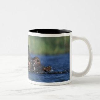 Botswana, Moremi Game Reserve, Hippopotami Coffee Mugs