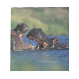 Botswana, Moremi Game Reserve, Hippopotami Notepad