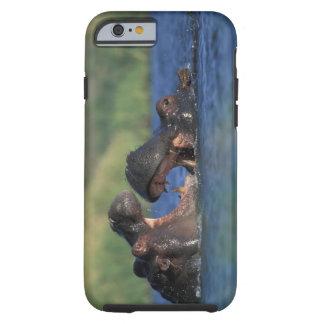 Botswana, Moremi Game Reserve, Hippopotami Tough iPhone 6 Case