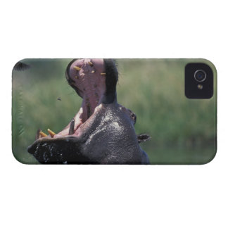 Botswana, Moremi Game Reserve, Hippopotamus iPhone 4 Case