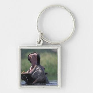 Botswana, Moremi Game Reserve, Hippopotamus Keychain