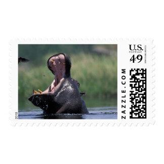 Botswana, Moremi Game Reserve, Hippopotamus Stamps