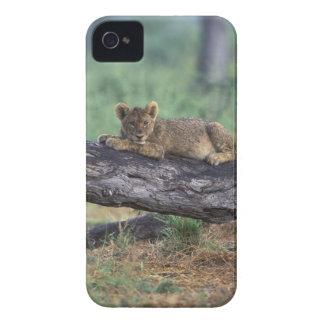 Botswana, Moremi Game Reserve, Lion cub iPhone 4 Case