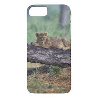 Botswana, Moremi Game Reserve, Lion cub iPhone 7 Case
