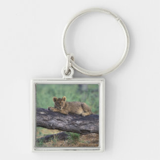 Botswana, Moremi Game Reserve, Lion cub Keychain