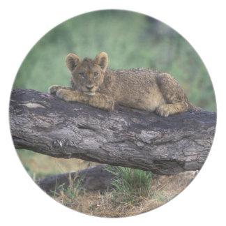 Botswana, Moremi Game Reserve, Lion cub Melamine Plate