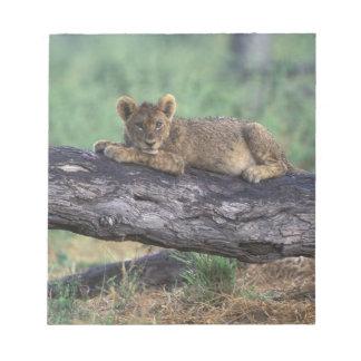 Botswana, Moremi Game Reserve, Lion cub Notepad