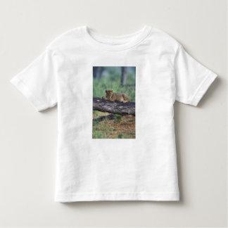 Botswana, Moremi Game Reserve, Lion cub Toddler T-shirt