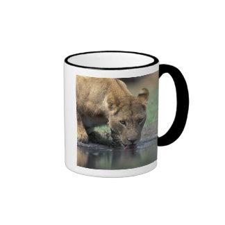 Botswana, Moremi Game Reserve, Lioness (Panthera 2 Coffee Mug