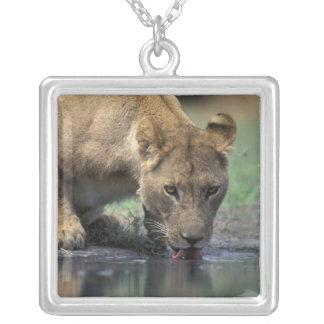 Botswana Moremi Game Reserve Lioness Panthera 2 Pendant