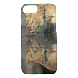 Botswana, Moremi Game Reserve, Lioness (Panthera iPhone 7 Case