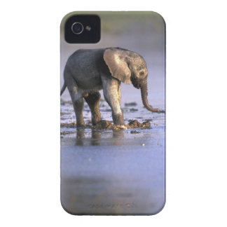 Botswana, Moremi Game Reserve, Young Elephant Case-Mate iPhone 4 Cases