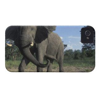 Botswana, parque nacional de Chobe, Bull agresiva iPhone 4 Case-Mate Protector