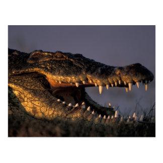Botswana, parque nacional de Chobe, cocodrilo del Postal
