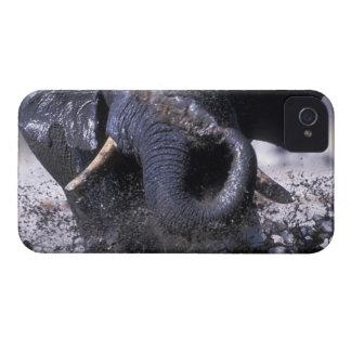 Botswana, parque nacional de Chobe, elefante 2 iPhone 4 Carcasa