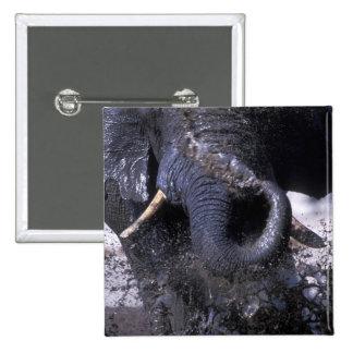 Botswana parque nacional de Chobe elefante 2 Pin