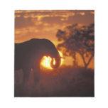 Botswana, parque nacional de Chobe, elefante de Bu Libreta Para Notas