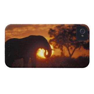 Botswana, parque nacional de Chobe, elefante de Bu iPhone 4 Case-Mate Carcasa