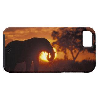 Botswana, parque nacional de Chobe, elefante de Bu iPhone 5 Case-Mate Carcasa