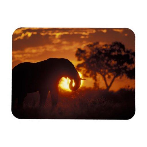 Botswana, parque nacional de Chobe, elefante de Bu Imanes De Vinilo