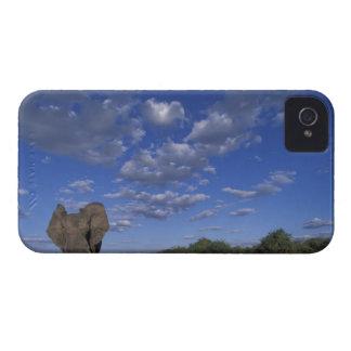 Botswana, parque nacional de Chobe, elefante de ca iPhone 4 Cobertura