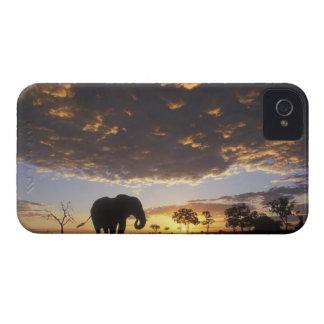 Botswana, parque nacional de Chobe, elefante Case-Mate iPhone 4 Cárcasas