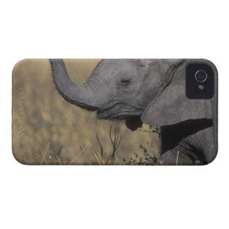 Botswana, parque nacional de Chobe, elefante joven iPhone 4 Case-Mate Protector
