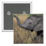 Botswana, parque nacional de Chobe, elefante joven Pins