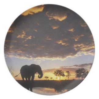 Botswana, parque nacional de Chobe, elefante Plato De Cena