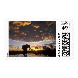 Botswana, parque nacional de Chobe, elefante Sellos