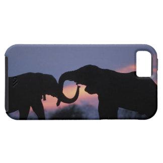 Botswana, parque nacional de Chobe, elefantes iPhone 5 Case-Mate Cobertura