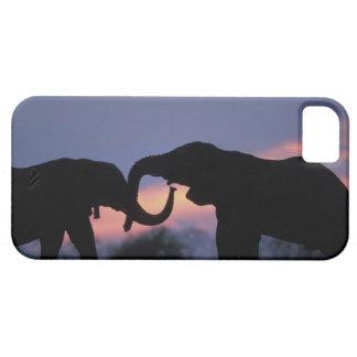 Botswana, parque nacional de Chobe, elefantes iPhone 5 Fundas
