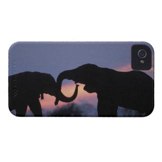 Botswana, parque nacional de Chobe, elefantes iPhone 4 Case-Mate Coberturas