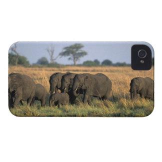 Botswana, parque nacional de Chobe, manada del ele iPhone 4 Fundas