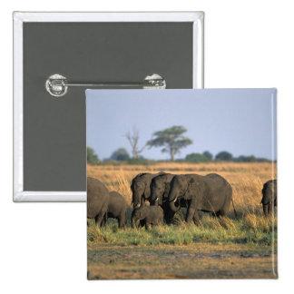 Botswana, parque nacional de Chobe, manada del ele Pin Cuadrada 5 Cm