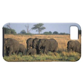 Botswana, parque nacional de Chobe, manada del iPhone 5 Fundas