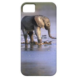 Botswana, reserva del juego de Moremi, elefante iPhone 5 Funda